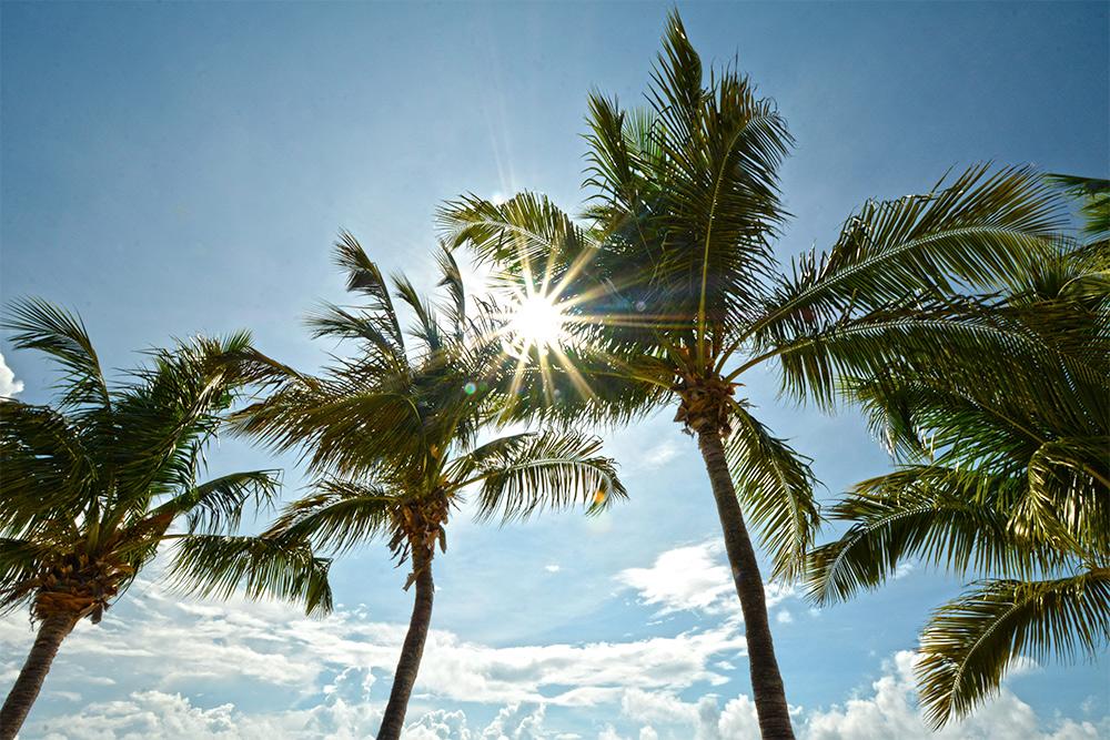 Sun Palm Tree MOTO Marketing Group